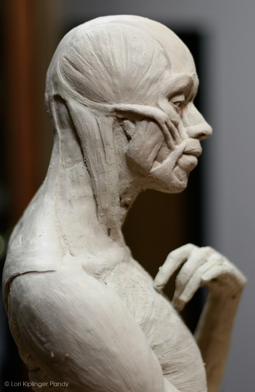 ecorche study in clay ©Lori Kiplinger Pandy