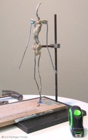 armature with first clay ©Lori Kiplinger pandy