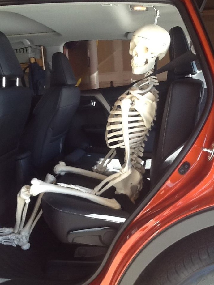 Stan the Skeleton buckled into my car and heading to the new studio - Lori Kiplinger Pandy